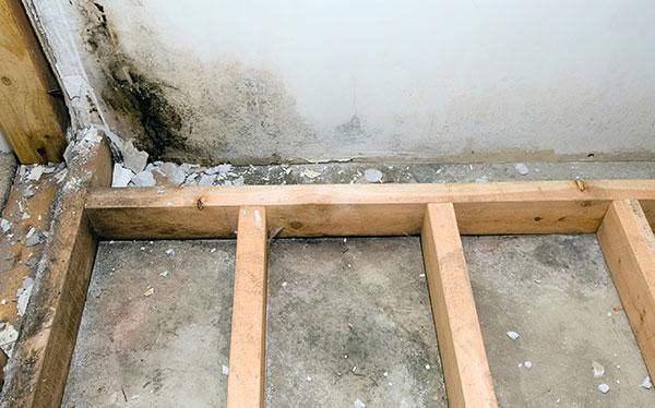 Mould in basement