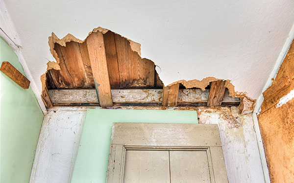 Rotten ceiling with damp