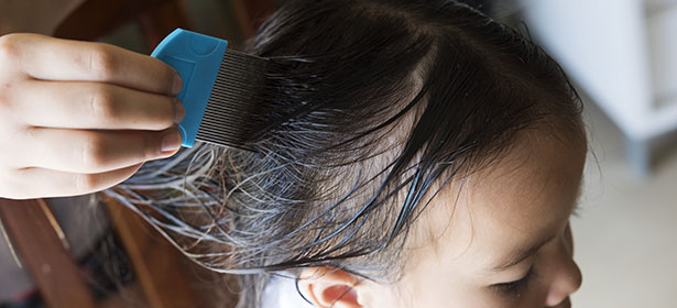 Head Lice And Nit Guides And Advice Which