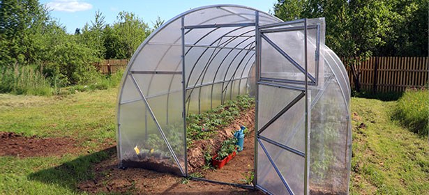 Glasshouse Or Plastic Greenhouse Which